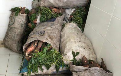 Hospital Napoleão Laureano recebe doação de mais de duas toneladas de alimentos da Conab
